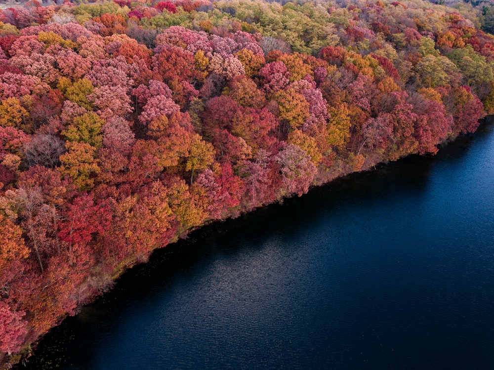 aerial photography of forest near body of water
