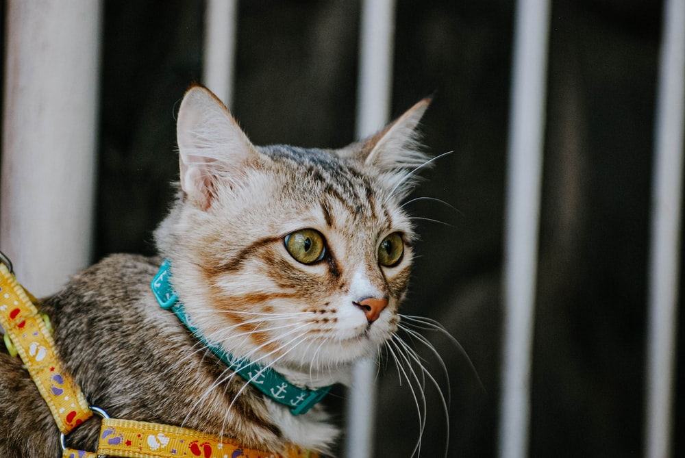 selective focus photography of a brown and white tabby cat