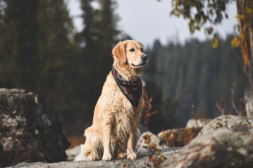 golden retriever dog near tree