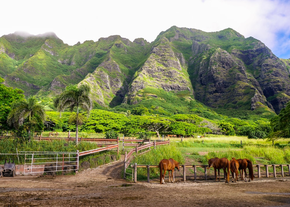 green mountains and brown horses