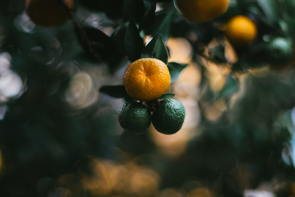 orange and green fruits close up photo