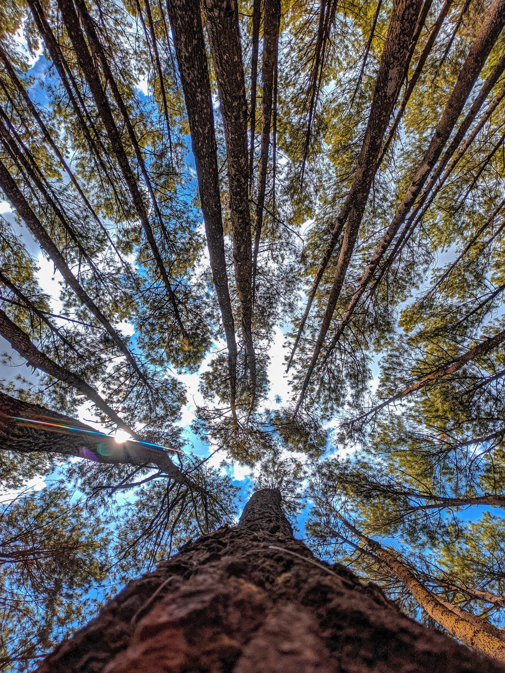 low-angle photography of green trees under a calm blue sky