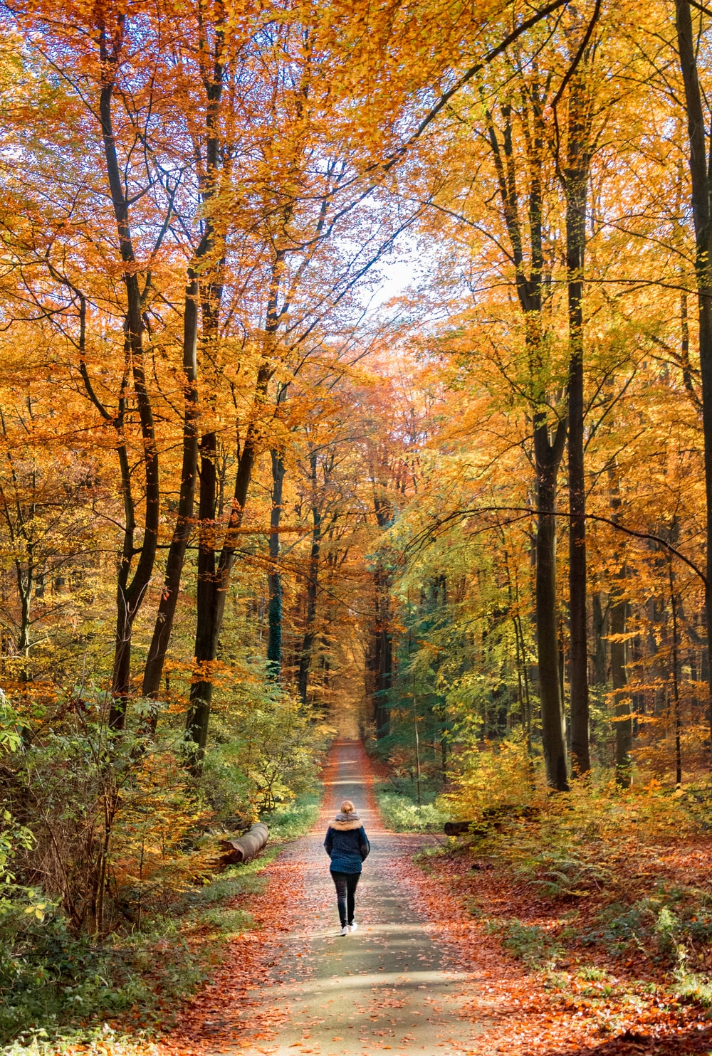 woman walking on road with trees on side