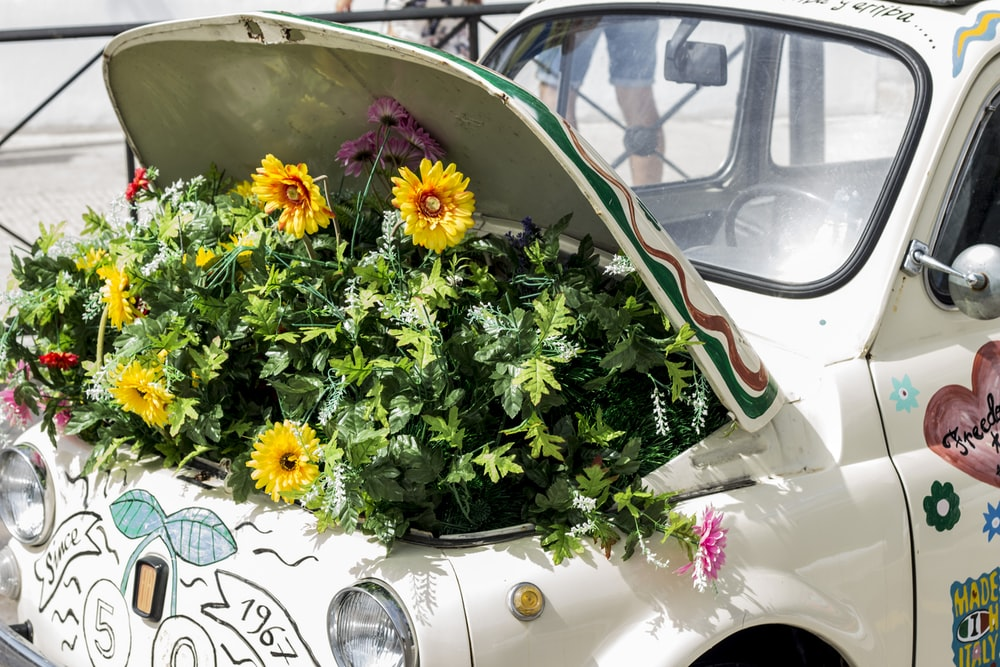 plants on vehicles trunk