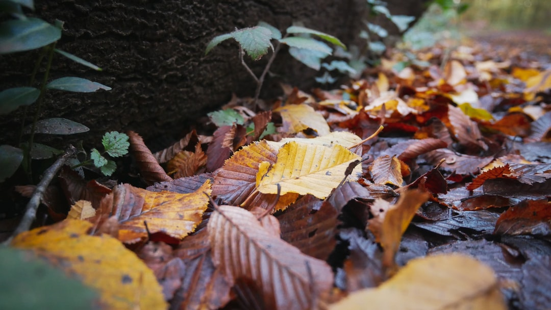 Close up on autumn leaves