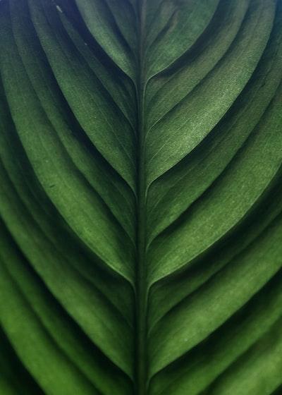1640. Növények világa