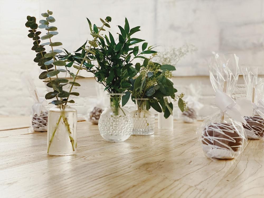 green-leaved plant in glass vase