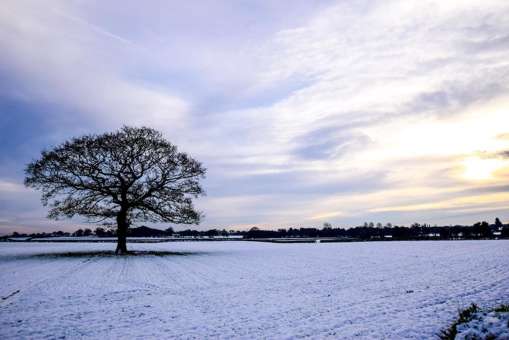 tree on snow field