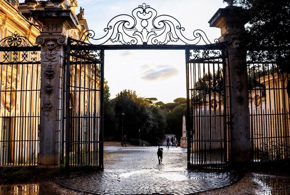 dog walking through opened gates