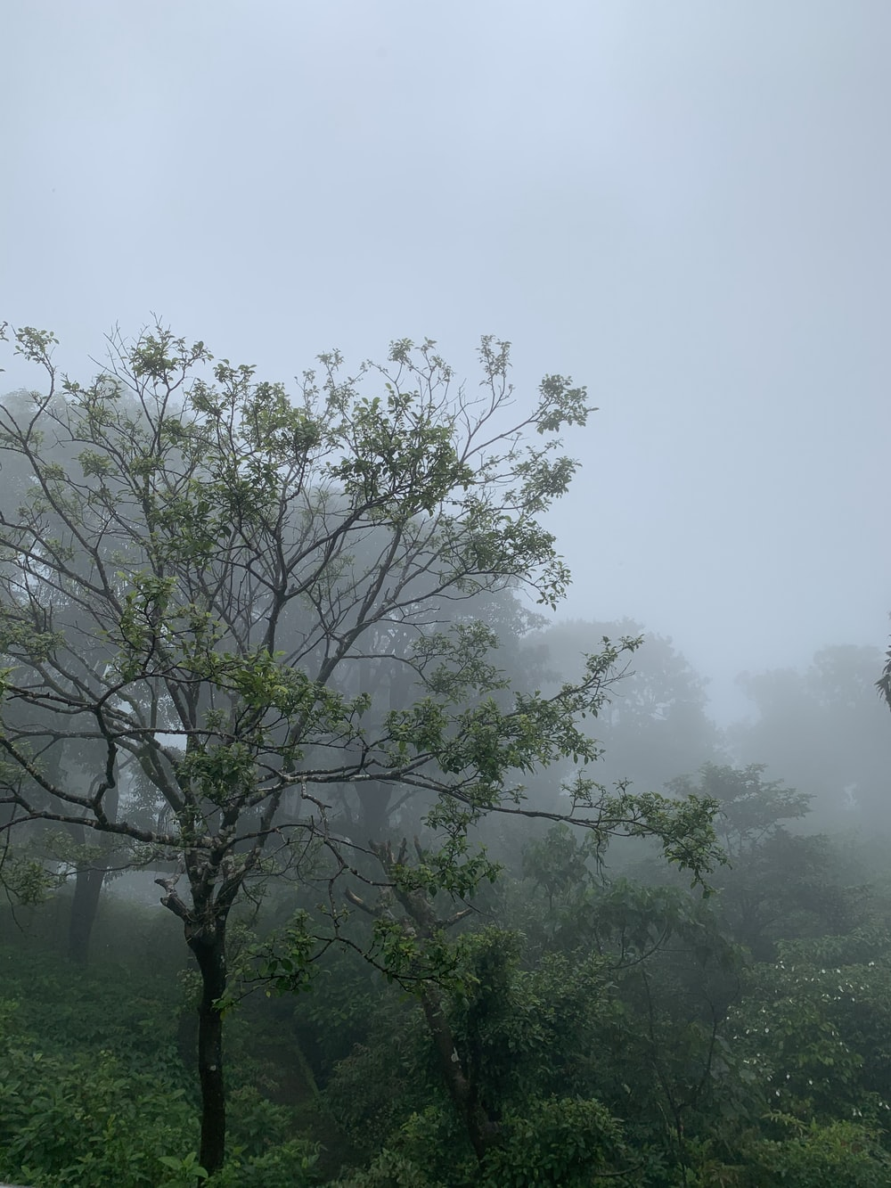 green trees foliage covered with white fog