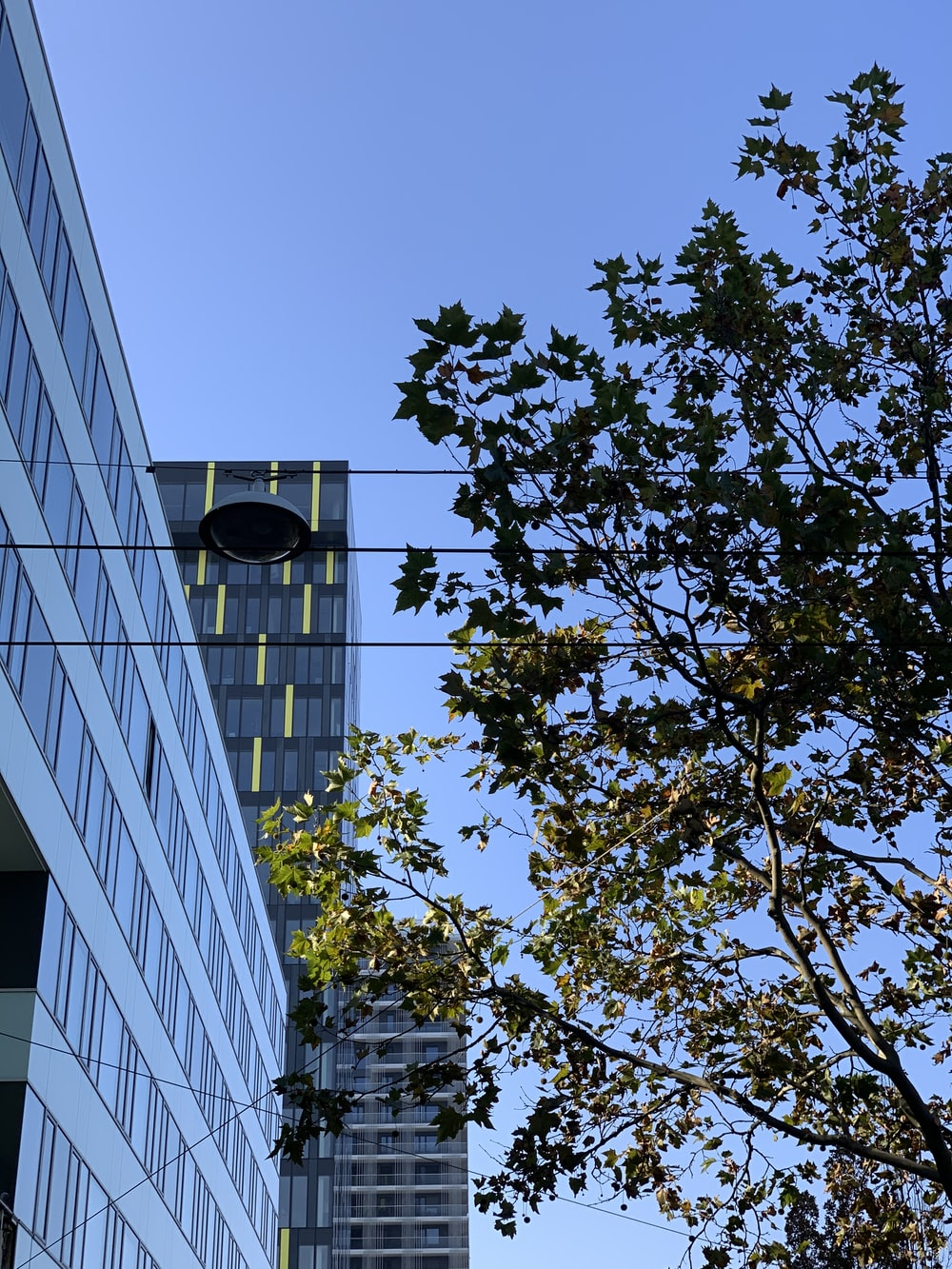curtain glass wall building near tree during daytime
