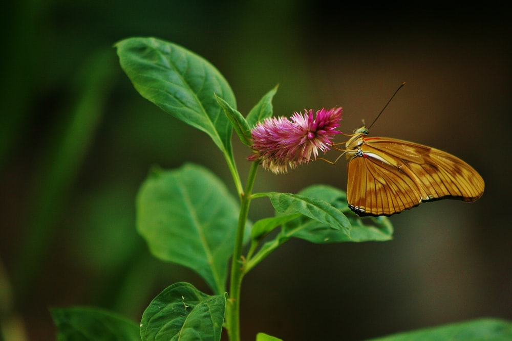 selective focus photography of brown butterfly perching pink flower