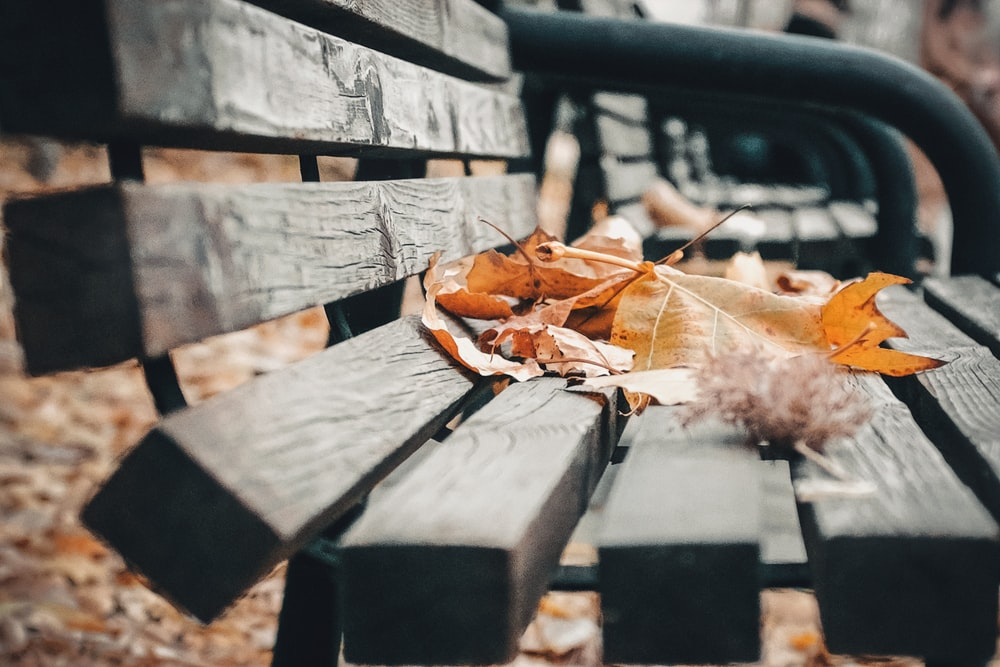 selective focus photography of brown and yellow maple leaves on wooden bench