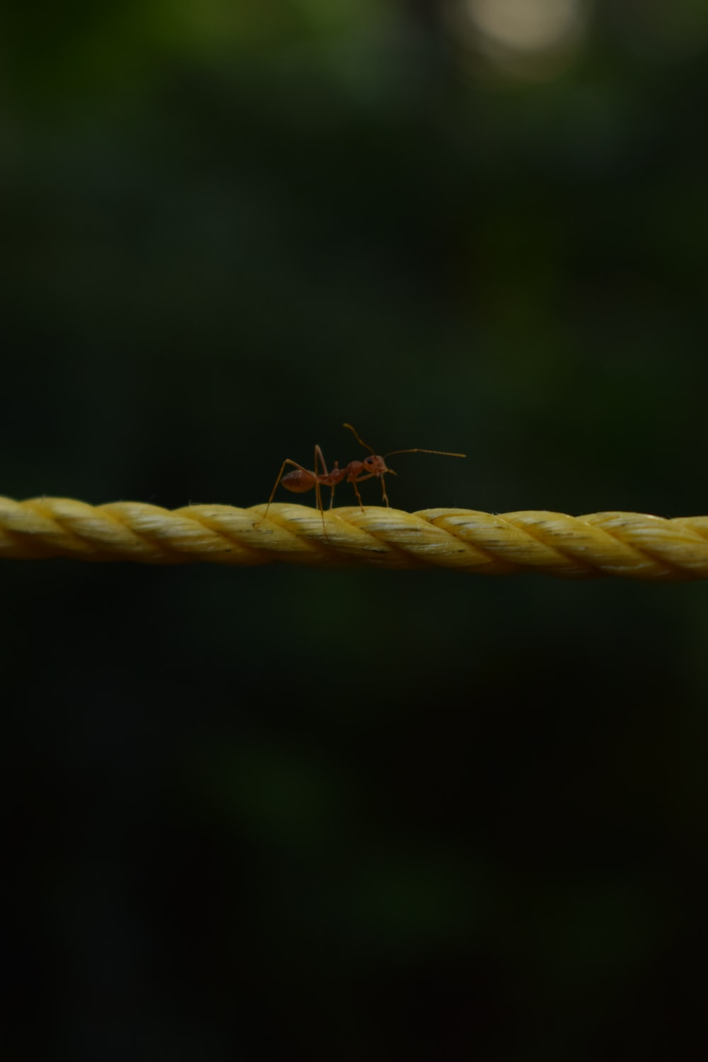 red ant on rope