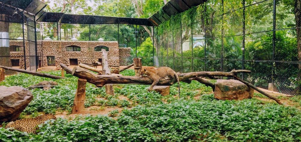 leopard on tree branch