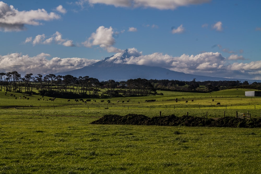 volcano and green grass field