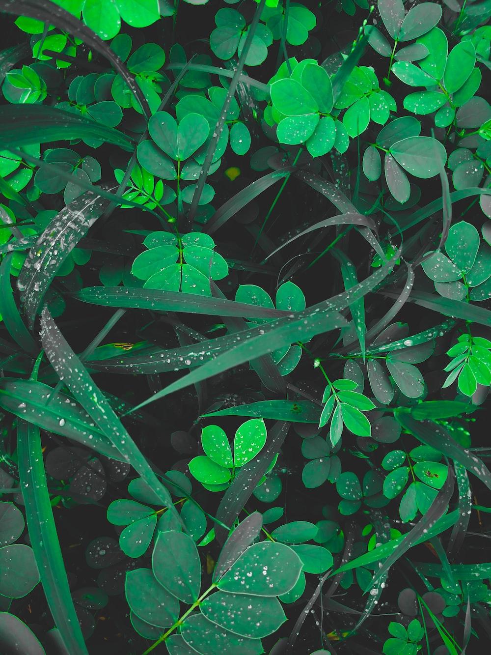 water dews on leaves