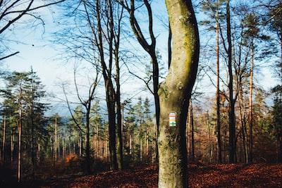 Lonesome wilderness hiking, Franconian Alb Hersbrucker Alb