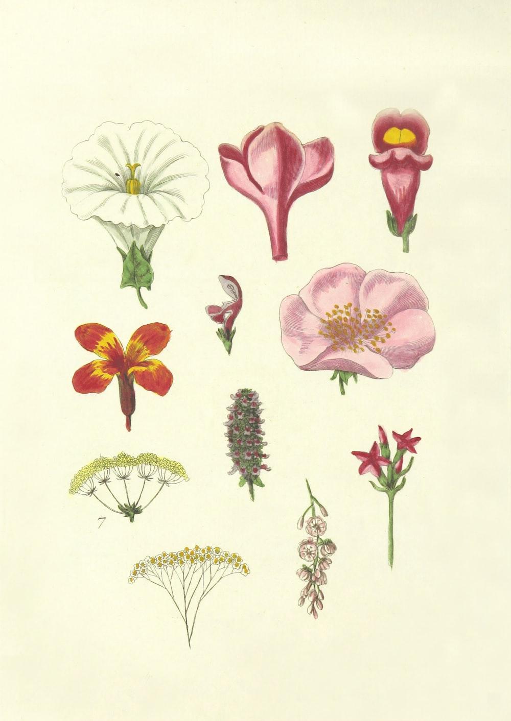 assorted-color flower illustrations
