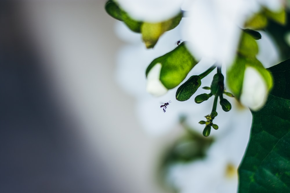 macro photography of green leaf plant