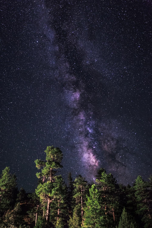 milkyway on sky over trees