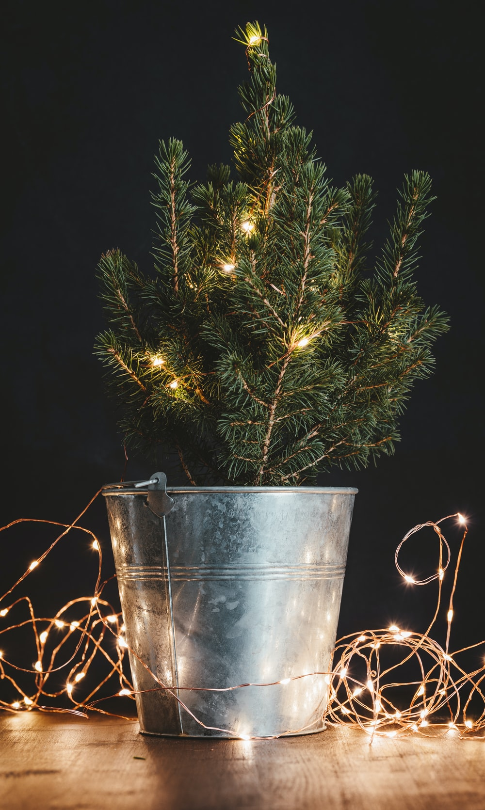 green Christmas tree in bucket with string lights