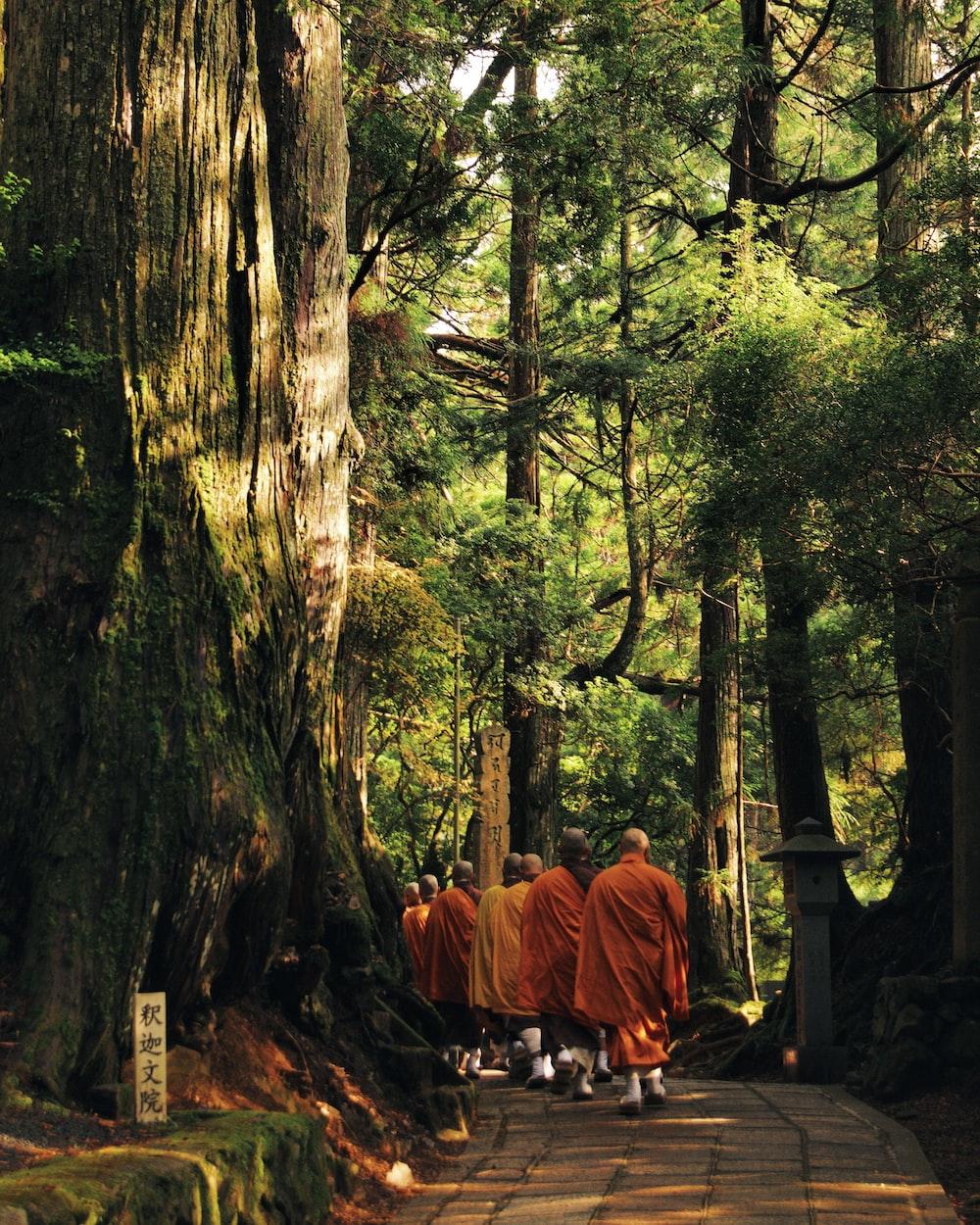 木に囲まれた経路上を歩く僧ks