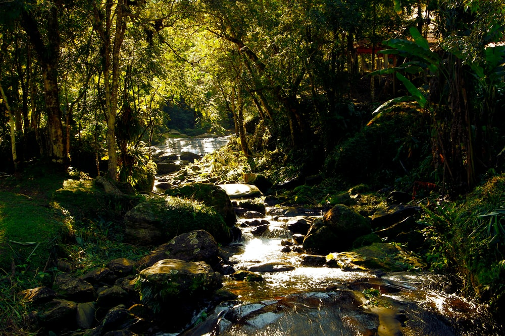 stream by forest during daytime