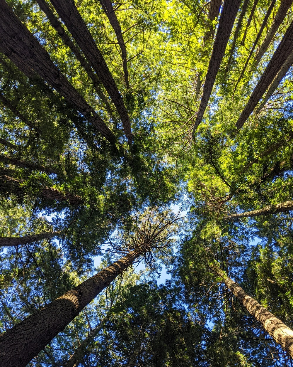 low-angle photography of green trees