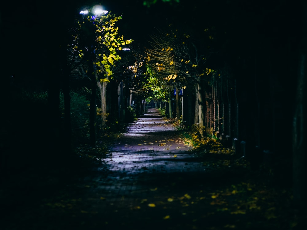 light from post lamp on street between trees