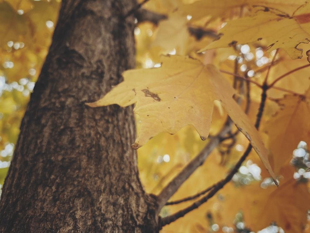 macro photography of yellow leaf tree