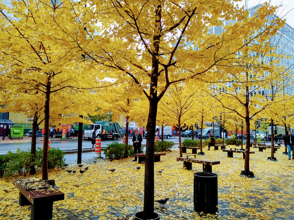 yellow and black trees