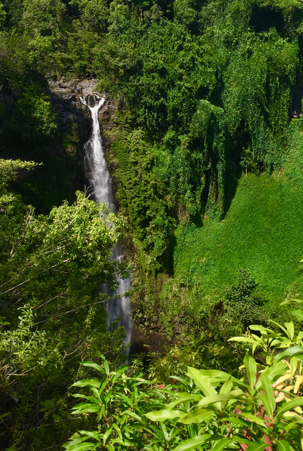 waterfalls surrounded with tall and green trees during daytime