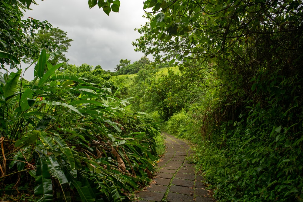 gray pathway surrounded with tall and green trees under white sky during daytime