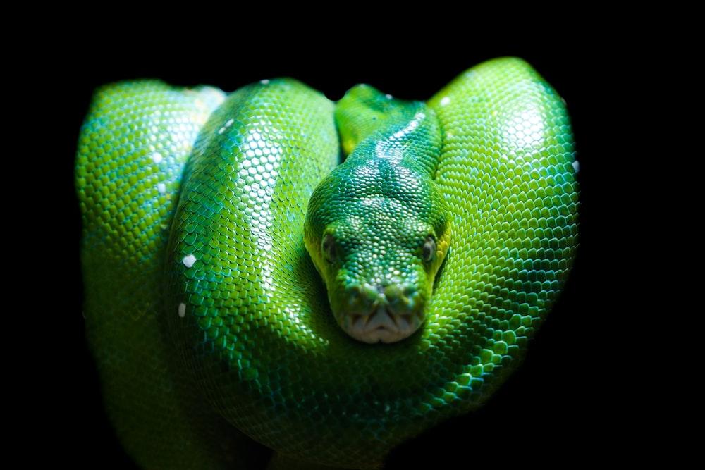 green snake photograph