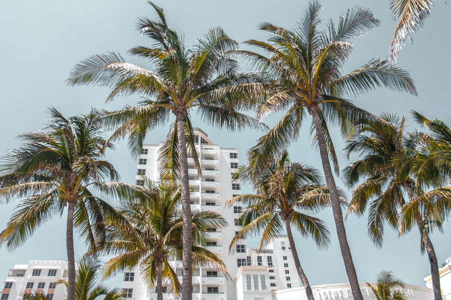 low-angle photography of high rise buildings behind coconut trees