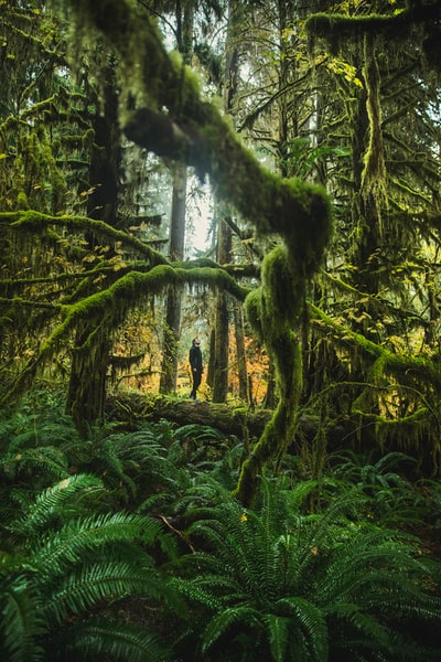 The Big Trip | The Hall of Mosses in Hoh Rainforest - Explore more at explorehuper.com/the-big-trip