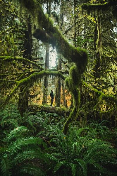 The Big Trip   The Hall of Mosses in Hoh Rainforest - Explore more at explorehuper.com/the-big-trip