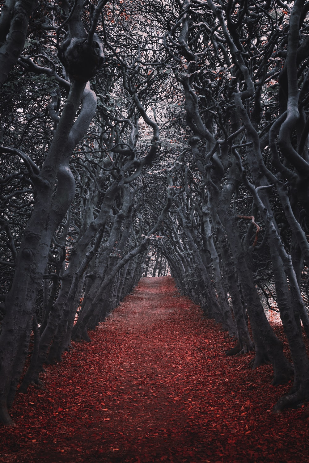 gray trees vector art