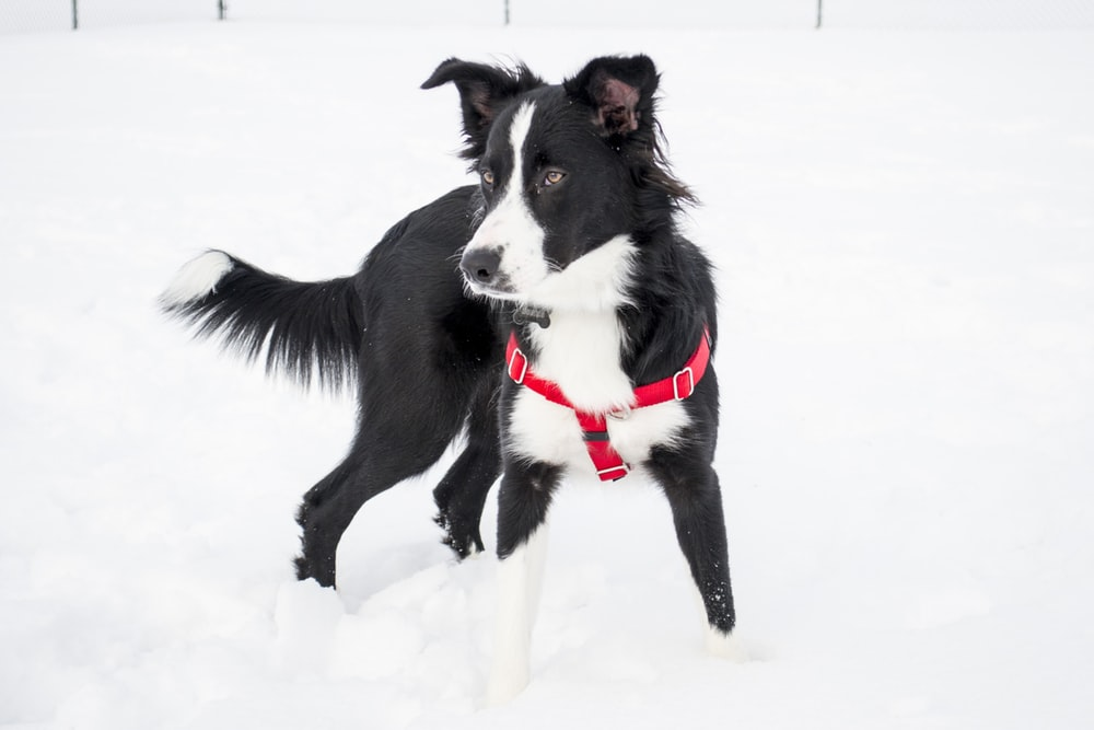 dog standing on snow covered field