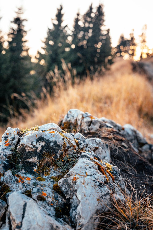 macro photography of brown stone beside plants