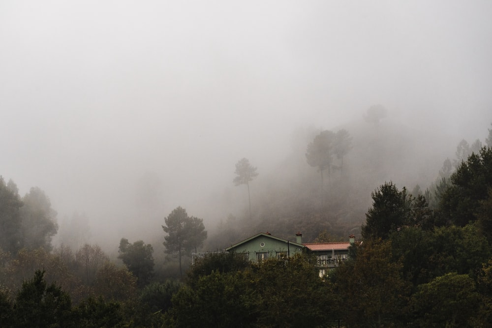 foggy house surrounded by trees