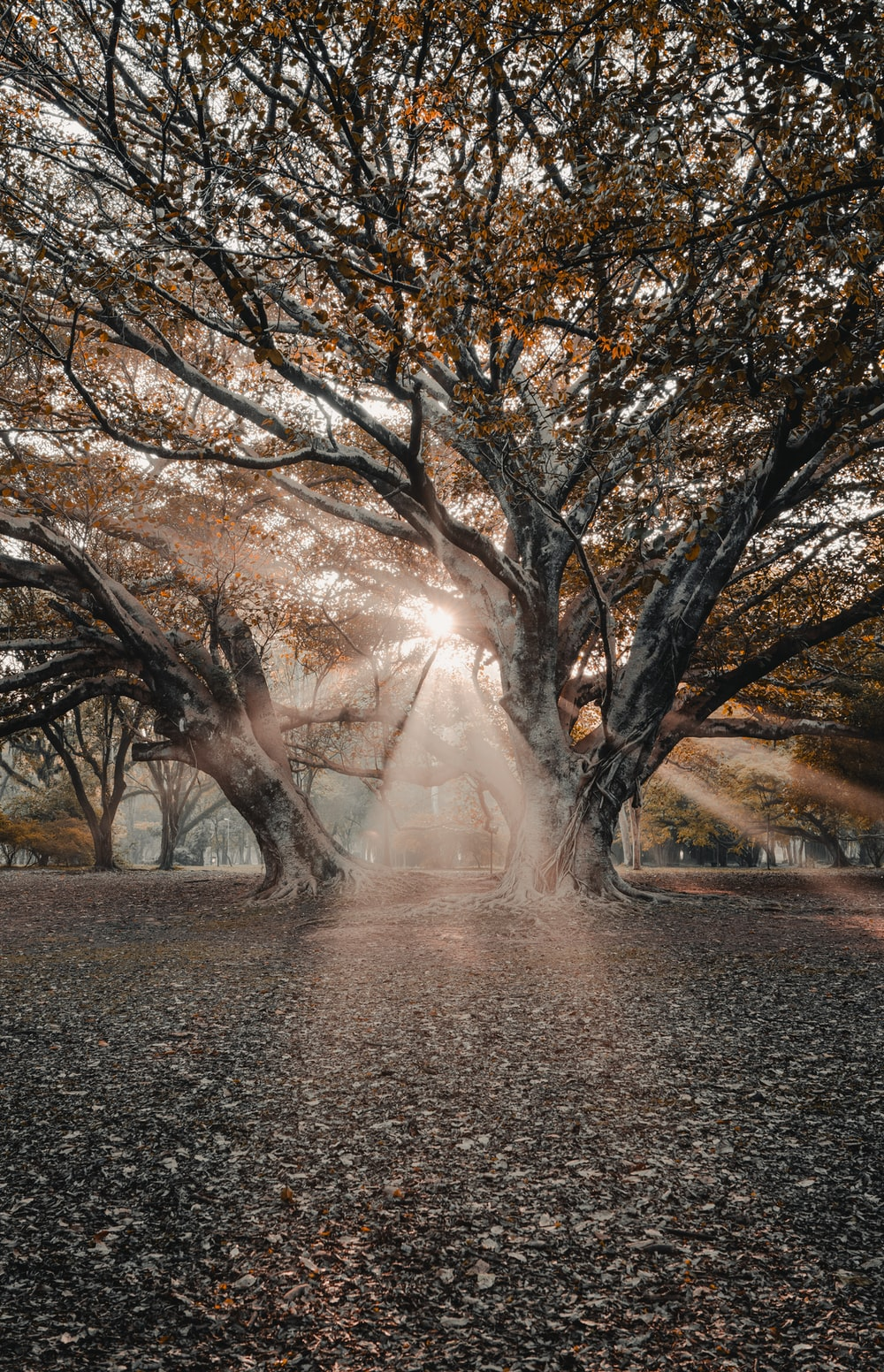 sunlight passing through tree branches