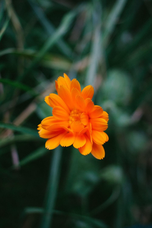 orange-petal flower