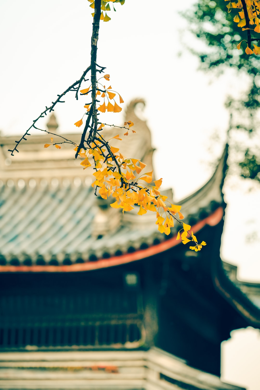 A record of 135GM telephoto in Huishan Ancient Town before the winter cold current
