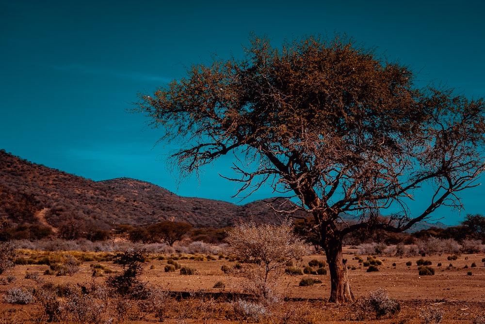 brown tree in desert