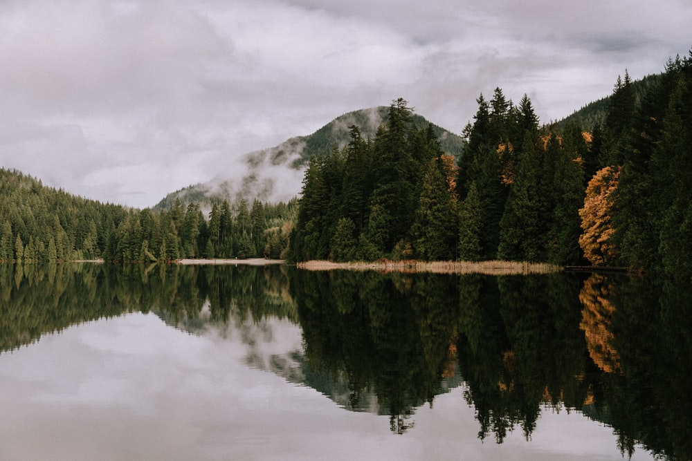 green trees near body of water under cloudy sky