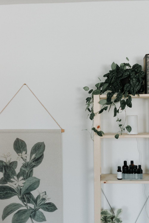green plants on white wooden shelf