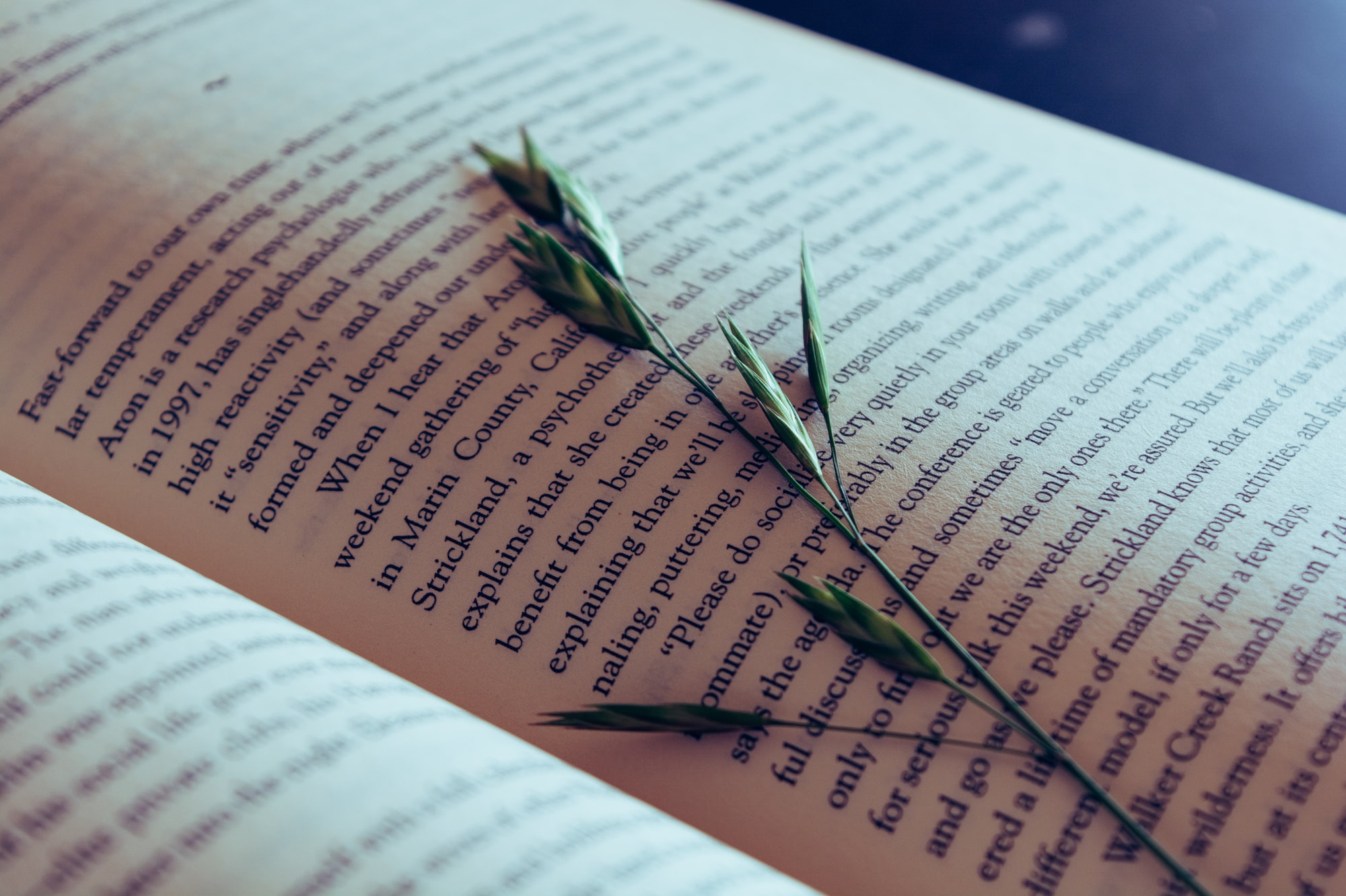 A novel splayed open. The stalk of a plant is pressed between the pages.