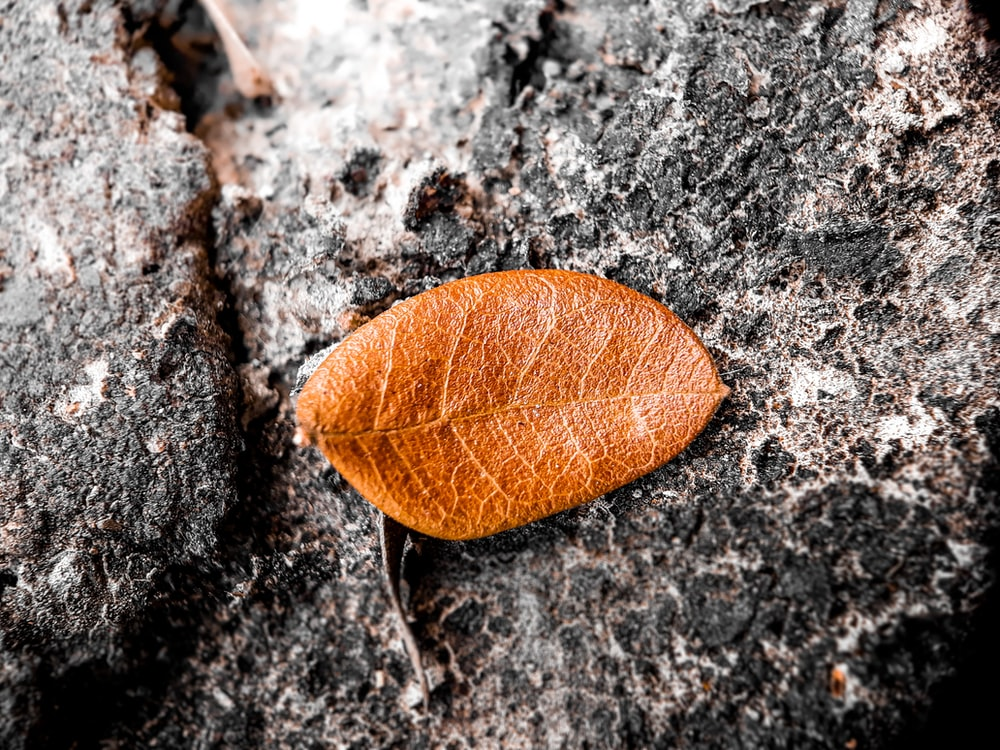 macro photography of brown ovate leaf